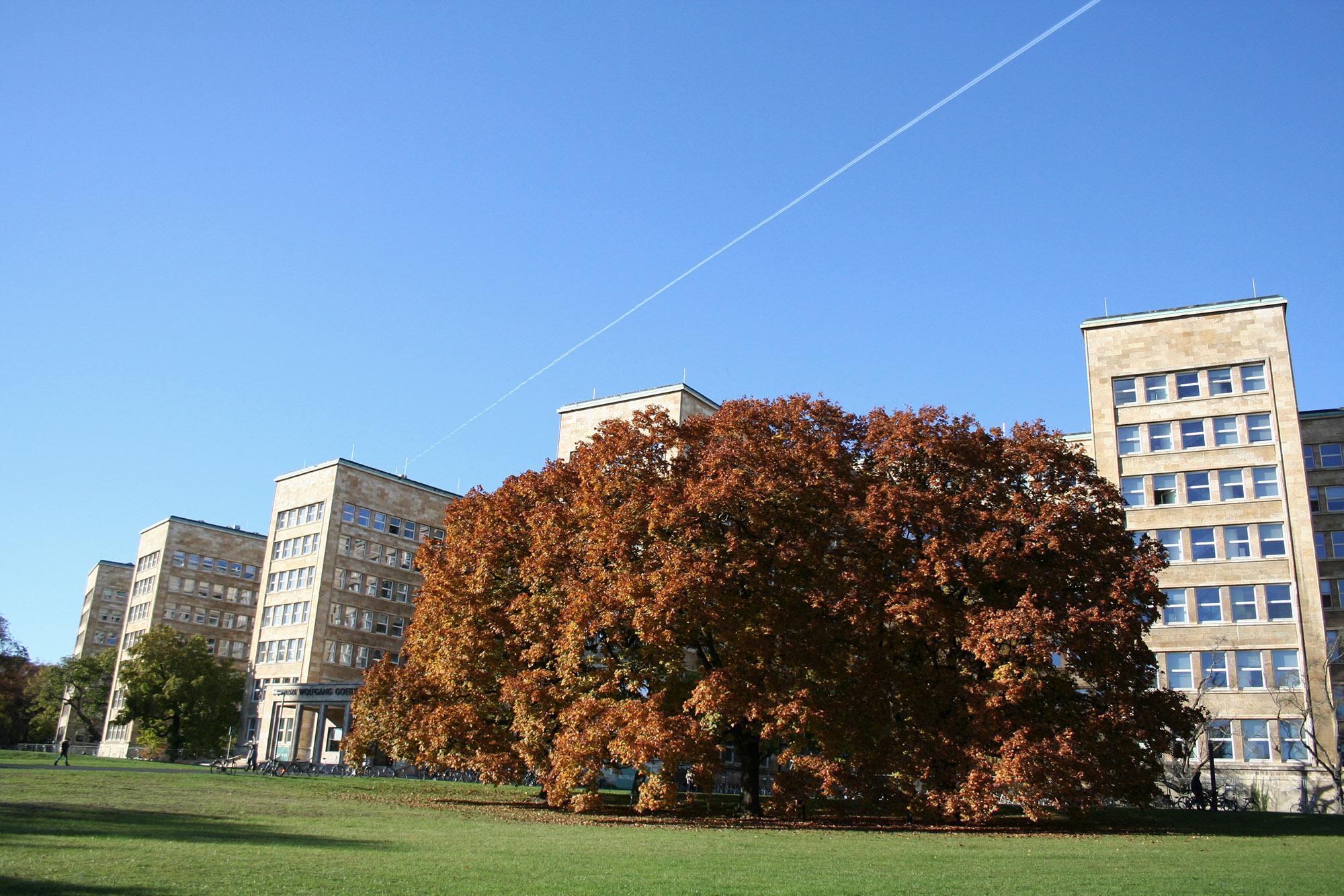 uni-frankfurt-zweitstudium-280